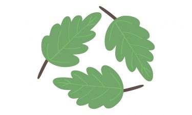 leaves in the shape of the recycle logo - links to the recycling page